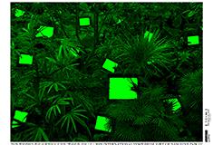 INTERNATIONAL SYMPOSIUM 'GIFT OF NAM JUNE PAIK 11' 《Media Ecology: Revisiting TV Garden》